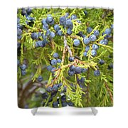 Juniper Berries Shower Curtain
