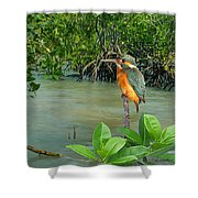 Kingfisher In The Mangroves Shower Curtain
