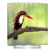 Kingfisher On The Lookout Shower Curtain