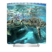 Kissing Turtle Shower Curtain