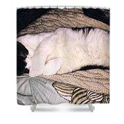 Kitty Kitty Shower Curtain