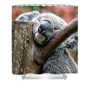 Koala Catching Zs Shower Curtain