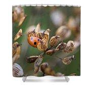 Lady Bird / Lady Bug In Flower Seed Head Shower Curtain