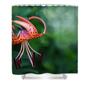 Lancifolium - The Tiger Lily Shower Curtain