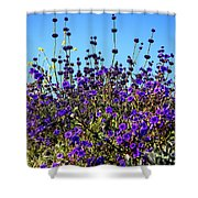 Lavender Blooms  Shower Curtain