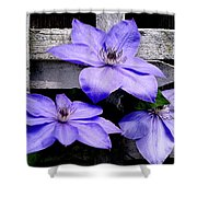 Lavender Clematis On Vine Shower Curtain