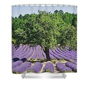 Lavender Field And Tree Shower Curtain