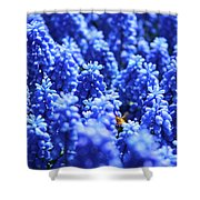 Lavender Field With Bee Shower Curtain