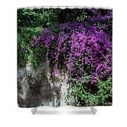 Lavender Pot Shower Curtain