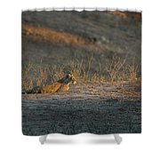 Lc12 Shower Curtain by Joshua Able's Wildlife