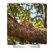 Lc13 Shower Curtain by Joshua Able's Wildlife