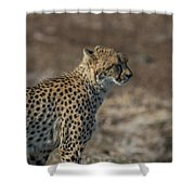 LC5 Shower Curtain by Joshua Able's Wildlife