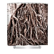Life Is Complicated - Sepia Shower Curtain