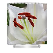 Lily Casa Blanca 3 Shower Curtain
