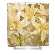 Lilycrest Dainties Shower Curtain