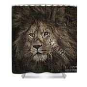 Lion Safari Shower Curtain