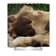 Lion's Feet Shower Curtain