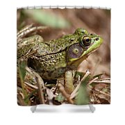 Little Green Frog Shower Curtain by William Selander