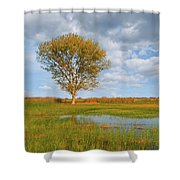 Lone Tree By A Wetland Shower Curtain