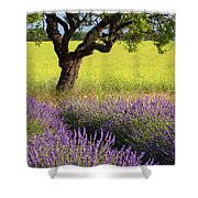 Lone Tree In Lavender And Mustard Fields Shower Curtain by Brian Jannsen