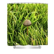 Lonely Little Mushroom Floating On The Grass Shower Curtain