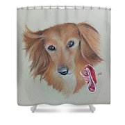 Long Haired, Miniature Dachshund Shower Curtain