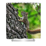 Lost Nuts Shower Curtain