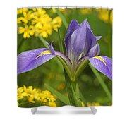 Louisiana Iris Shower Curtain