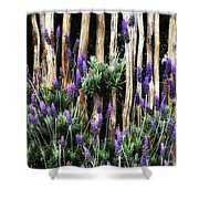 Love Of Lavender Shower Curtain