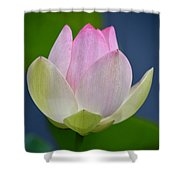 Lovely Soft Lotus Shower Curtain