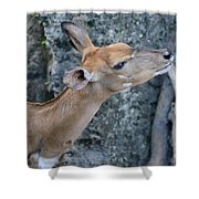 Lowland Nyala Shower Curtain