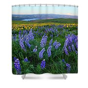 Lupines At Sunrise Shower Curtain