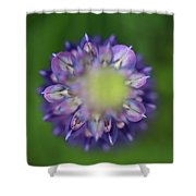 Lupins Shower Curtain