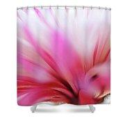 Macro Photo Of A Beautiful Flower. Chrysanthemum. Shower Curtain