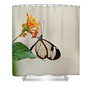 Made Of Glass Shower Curtain