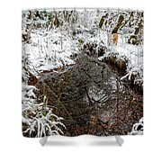 Maisie At The Pond - Winter Shower Curtain by Belinda Greb