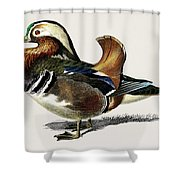 Mandarin Duck  Aix Galericulata Illustrated By Charles Dessalines D' Orbigny  1806-1876 1 Shower Curtain