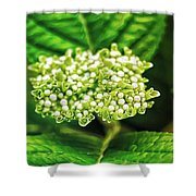 Many Buds Shower Curtain