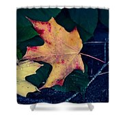 Maple And Ground Shower Curtain