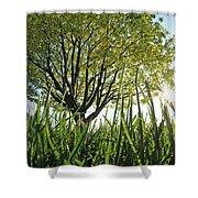 Marine Park Spring Sunshine Shower Curtain