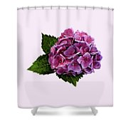 Maroon Hydrangea Shower Curtain