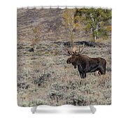 ME7 Shower Curtain by Joshua Able's Wildlife