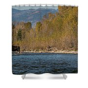 ME8 Shower Curtain by Joshua Able's Wildlife