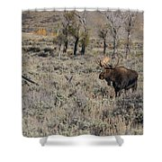 ME9 Shower Curtain by Joshua Able's Wildlife