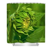 Metamorphosis-2 Shower Curtain