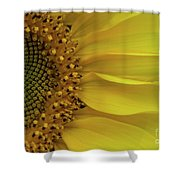 Metamorphosis-3 Shower Curtain