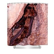 Mexican Free-tailed Bats Shower Curtain