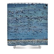 Migration Of The Snow Geese Shower Curtain