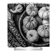 Mimi Pumpkins In Wicker Bowl Black And White Shower Curtain