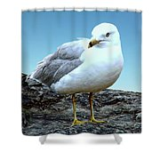 Moewe Seagull Shower Curtain